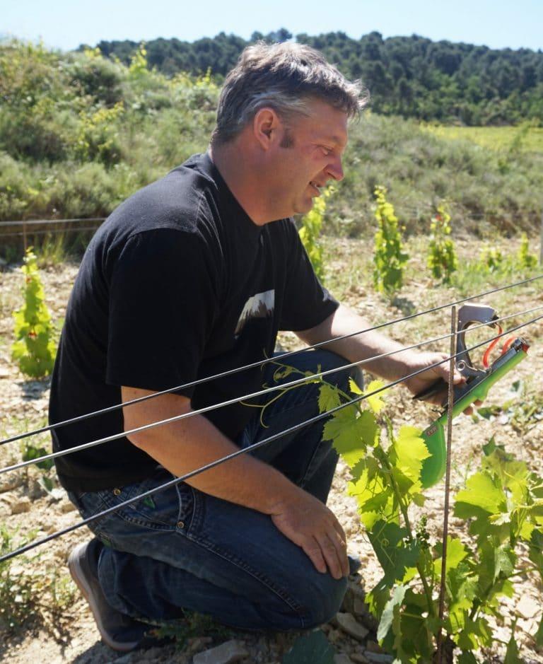 Travail de la vigne, attache d'un plantier