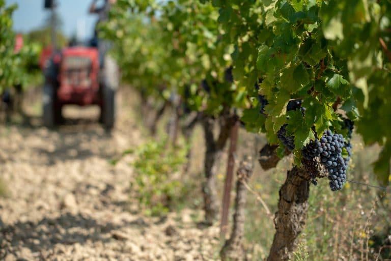 Passage du tracteur dans les vignes