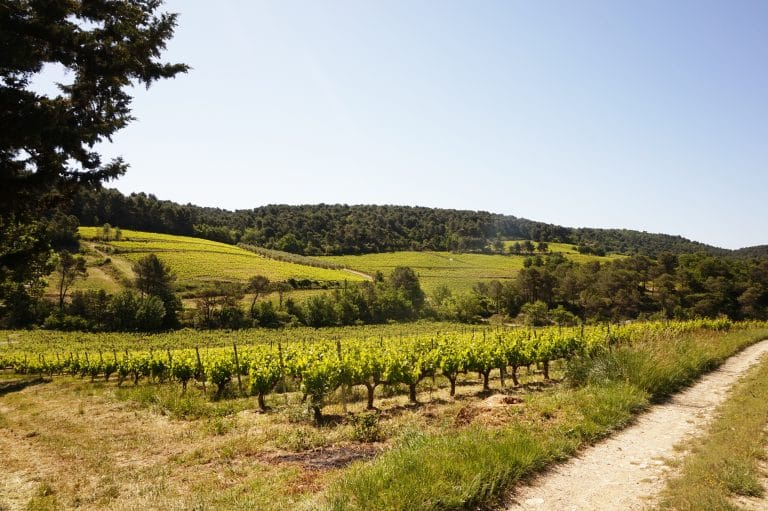 Vue sur les vignes et oliviers duDomaine Eyguestre à Séguret